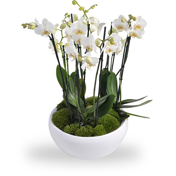 Arrangement d orchidees blanches