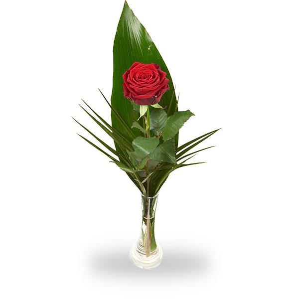 1 rode roos met blad inclusief vaasje