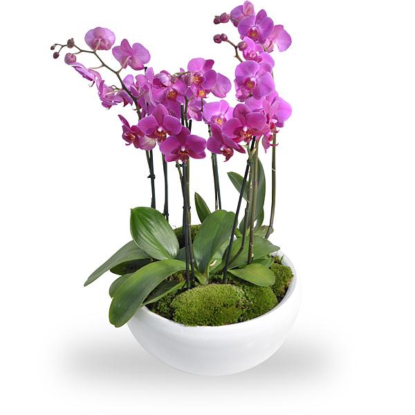 Arrangement d orchidees roses