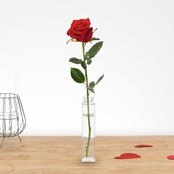 1 Long stem red rose