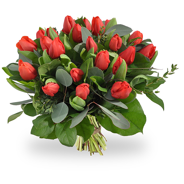 Bouquet red tulips standard