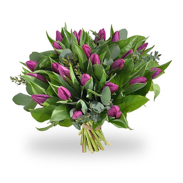 Bouquet de tulipes violettes grand